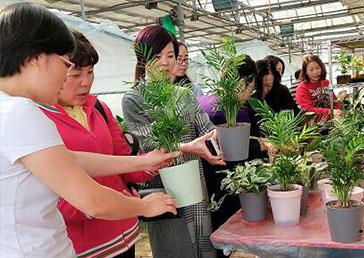 女企协会成员来基地亲近大自然、体验农家乐、盆栽DIY